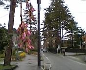 角館桜はまだまだ